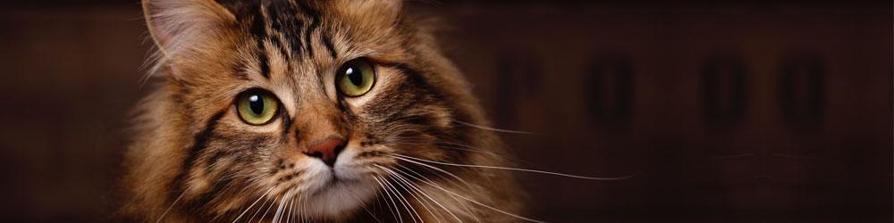 Kattförbundet SVERAKs ID-register